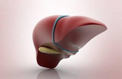 Вид органа