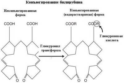 Виды биллирубина