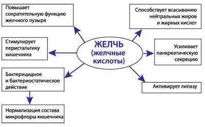 Функции желчи