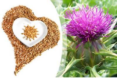 Семена и цветы расторопшы