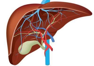 Структура органа