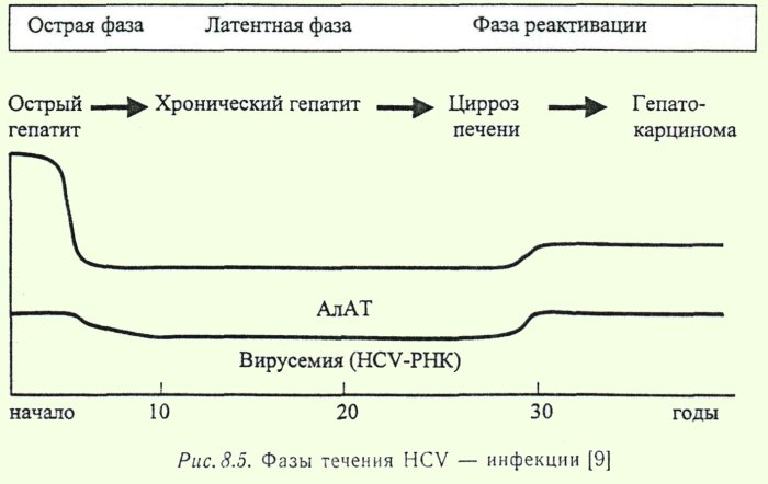 Фазы течения гепатита С