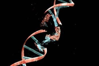 Подавление синтеза геномной ДНК