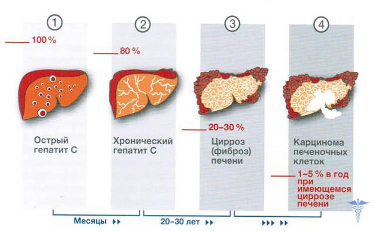Прививки от гепатита в ввели