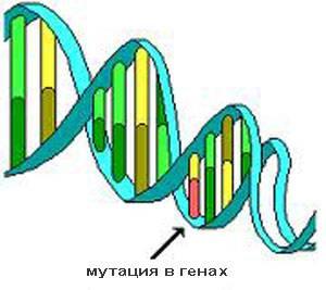 мутация