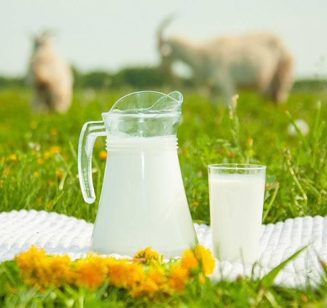 Как пить козье молоко