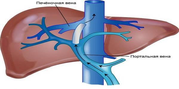 Лечение цирроза печени с асцитом препараты