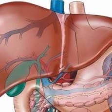 Что выполняет орган в организме