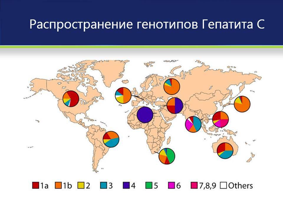 Распространенность генотипов вируса гепатита С