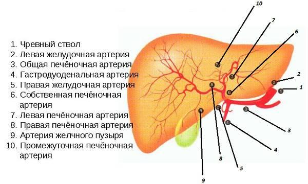 Алкогольная болезнь печени код по мкб 10