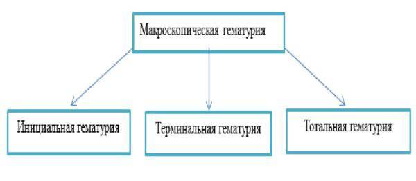 Классификация макроскопической гематурии
