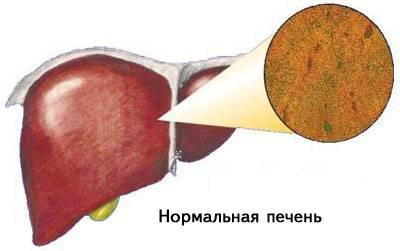 Здоровая печень
