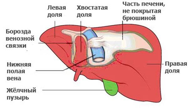 Схема органа