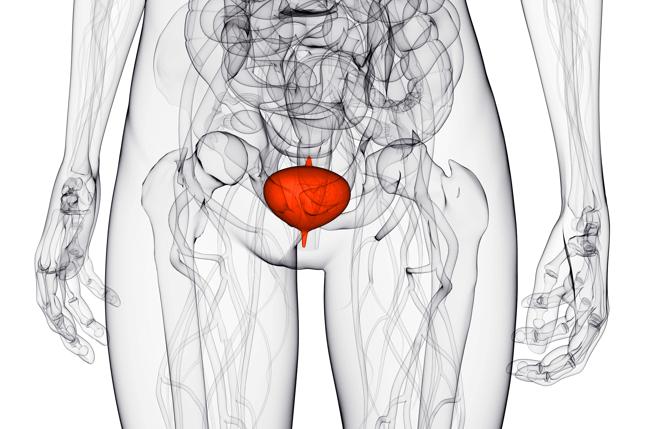 Структура тела