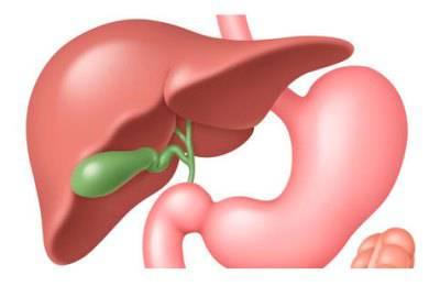 Важность оздоровления органа