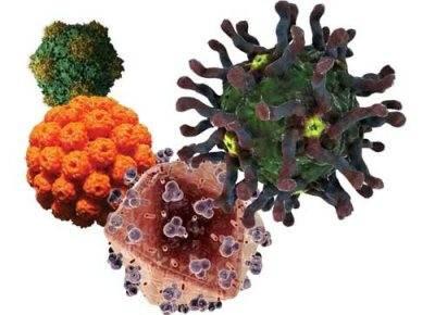 Клетки вирусного гепатита