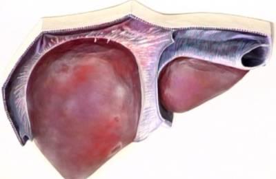 Здоровый вид железы